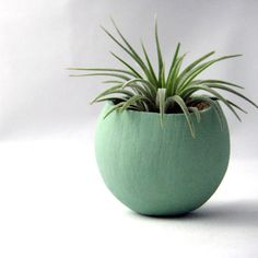 Single Air Plant Pod  Sage by seaandasters on Etsy, $11.00