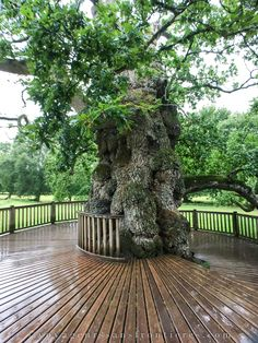 Here is the Guillotin Oak, a beautiful oak in the forest of Brocéliande ! Peaceful Places, Wonderful Places, Beautiful Forest, Photos Voyages, French Countryside, Central Europe, Garden Bridge, Brittany, Places To Go