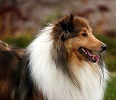 Fatty Tumors (Lipomas) Treatment for Dogs - PetMeds®
