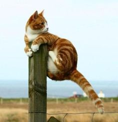 I'm okay... I've got this...lol!  Cats are fun to watch! Follow me at http://www.pinterest.com/cattreehouse/