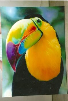 ideas for tropical bird wallpaper parrots Pretty Birds, Love Birds, Beautiful Birds, Animals Beautiful, Cute Animals, Beautiful Pictures, Tropical Birds, Exotic Birds, Colorful Birds