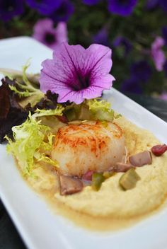 Scallops on Pinterest | Scallops, Seared Scallops and Parsnip Puree
