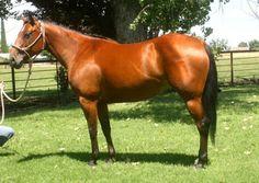Bognuda Playgirl FOX aka  - Bay  Quarter Horse Mare in Stockton, California 95215
