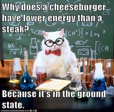Funny pictures about Chemistry Cat Pun. Oh, and cool pics about Chemistry Cat Pun. Also, Chemistry Cat Pun photos. Memes Humor, Humor Nerd, Nerd Jokes, Math Jokes, Funny Memes, Cat Memes, Cats Humor, Corny Jokes, Teacher Jokes