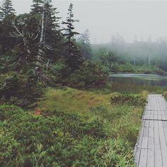 【kimi_sio】さんのInstagramの写真をピンしています。《神仙沼自然休養林/共和町/北海道  Place where immortal mountain wizard lives 「羊と鋼の森」 読みました 素敵な内容でした  ____________ 音楽は人生を楽しむためのものだ。はっきりと思った。 決して誰かと競うようなものじゃない。 競ったとしても、勝負はあらかじめ決まっている。 楽しんだものの勝ちだ。 ____________  主人公の想い印象的でした 音楽も写真も同じですよね  写真を楽しんでいる そういう皆さんに 心惹かれます  本教えてくれてありがとう  #marsh#niseko#wood#woods#forest#hokkaido#japan#nature#naturelovers#mist#fog#tree#trees#沼#神仙沼#ニセコ#北海道#自然#霧#羊と鋼の森#読書#本#森#林#木》