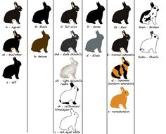 You've come to the right place! This site will provide basic lessons on rabbit genetics, including how genetics work, rabbit colors, fur types, and the dwarf gene. Use the links above to select...