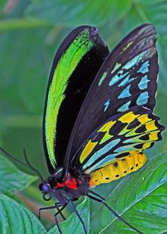 Day-glo Butterfly