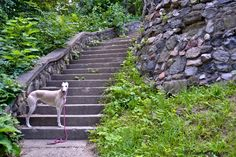 Stairway to the Enchanted Forest -- Tales and Tails