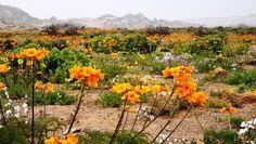 desierto florido - Buscar con Google