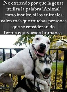 "La palabra ""animal"" Best Dog Quotes, Dog Quotes Love, Dog Quotes Funny, Funny Dogs, Happy Animals, Animals And Pets, Funny Animals, Cute Animals, Amor Animal"