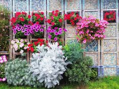 Vertical garden petunia