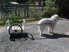 building a dog cart from pvc... would be awesome if the dog could pull the cat carriers around the airport...