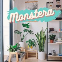Everywhere in nordic magazines we see monstera, it is everywhere. We love it and we will continue to do so for a long time. We love it because of its large leaves but also because of its easy presence. House Plants, Magazines, Leaves, Easy, Blog, Home Decor, Journals, Decoration Home, Room Decor