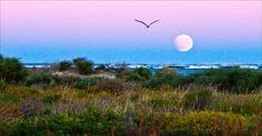 117 - Eclipse Moonset with gull, Osprey Bay, Cape Range National Park, Ningaloo Reef,  Exmouth, Western Australia