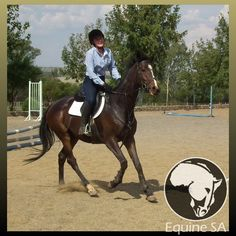Horses For Sale, over 50 Breeds, 30 Disciplines/Sports, Stud Farms, Stallion Services Stud Farm, Horses For Sale, Thoroughbred, South Africa, Bright, Smile, Animals, Animales, Animaux
