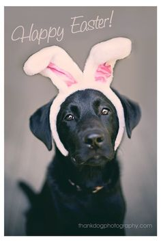 To my sister Tina aka Animal Lover Happy Easter Dog Golden Retrievers, Pitbull, I Love Dogs, Cute Dogs, Labrador Retriever Dog, Labrador Dogs, Mundo Animal, Dog Pictures, Animal Pictures