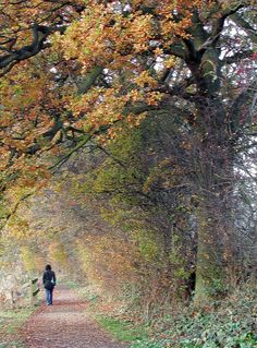 Walk in Autumn Countryside, England | Flickr - Photo Sharing!