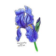 No.067 Iris