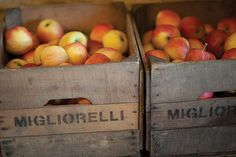 Eat Local, Act Global - The Farm Delivery Movement in the Hudson Valley of NY. Apples from Migliorelli Farms. (photo - ROY GUMPEL)