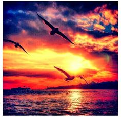 Beautiful sunset with birds flying over the water!!! More