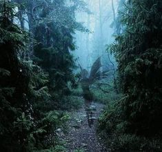 Dark Fairycore | Aesthetics Wiki | Fandom in 2021 | Dark green aesthetic, Dark forest aesthetic, Dark fairycore