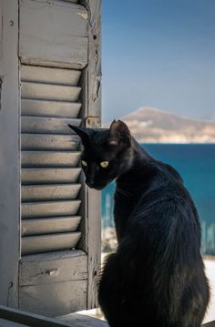 """Kitty-Cat Advice:  """"Look and think before opening the shutter; the heart and mind are the true lens of the camera.""""   ❤️"""