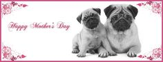 Pug Holiday Themed Facebook Cover Photos For Your Timeline. Pug Mother's Day Facebook Cover Photo
