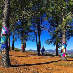 """""""We loved exploring the 'Warm Trees' exhibition and also caught a few Pokemon too!"""" Instagrammer @teachingideasforparents recently visited the largest knitted community art work in the world, 'Warm Trees', at the National Arboretum Canberra. Join one of the many free 'knit ins', try your hand at knitting a maple leaf, decorate Pod Playground or enjoy a free guided Warm Trees walk. #visitcanberra #onegoodthingafteranother"""