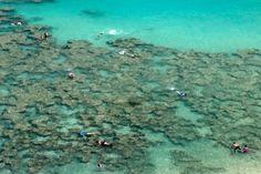 Hanuma Bay, HI - Snorkeling in the sunken volcano