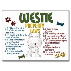 Westie Rules!