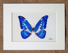 Butterfly Print, Blue Butterfly,Butterfly Artwork,Cyrus Helena, Unframed Butterfly Print - popular choice, a favorite among butterfly lovers by Canvasbutterfly on Etsy