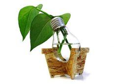 decoración de plantas con piedras | Ideas decorativas y distintas alternativas en recipientes para potus