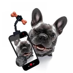 Smartphone Treat Holder - Dog Selfie Stick Use Smartphone Treat Holder - Dog Selfie Stick to get the picture pawfect snapshot! Trick your dog into holding still Selfie Poses, Dog Selfie, Selfie Stick, Easiest Dogs To Train, Treat Holder, Dog Chews, France, Hygiene, Dog Behavior