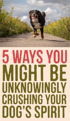 5 Ways you might be unknowingly crushing your dogs spirit