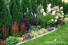 Ogrodowa przygoda Łukasza :) - strona 719 - Forum ogrodnicze - Ogrodowisko.