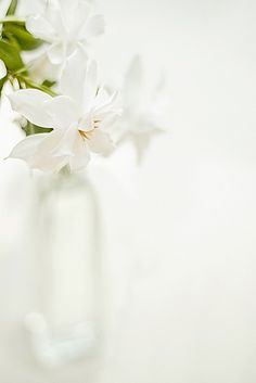 You can't go wrong with white flowers. My first choice when buying flowers for the house is white lillies. My Flower, White Flowers, Beautiful Flowers, Colorful Roses, Deco Floral, White Cottage, Shades Of White, White Aesthetic, Bunt