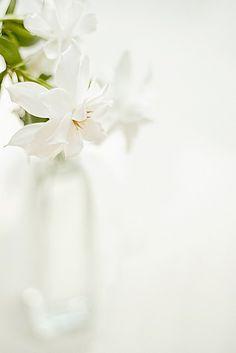✿ White