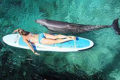 swim/ surf with dolphins one day we will know this this again. Orcas, Stand Up Paddle Board, Surf Board, Sports Nautiques, Sup Yoga, Cozumel, Surfs Up, Paddle Boarding, Beach Bum