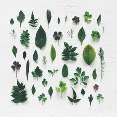 Leaves organized neatly knolling photography