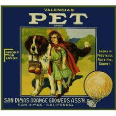 San Dimas Pet Saint Bernard Dog Orange Citrus Fruit Crate Box Label Art Print