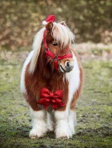 Eine Auswahl interessanter und lustiger Bilder – JFA UNIjuntos – – Подборка интесных и веселых картинок Eine Auswahl interessanter und lustiger Bilder - Animals and pets Pretty Horses, Horse Love, Beautiful Horses, Animals Beautiful, Cute Baby Horses, Cute Little Animals, Cute Funny Animals, Miniature Ponies, Cute Ponies