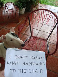 I don't know what happened to the chair.  http://dog-shaming.com/post/34296142030/i-dont-know-what-happened-to-the-chair