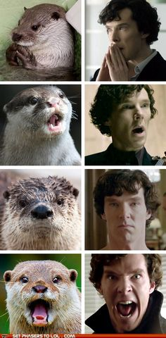 Funny pictures about Otters who look like Benedict Cumberbatch. Oh, and cool pics about Otters who look like Benedict Cumberbatch. Also, Otters who look like Benedict Cumberbatch photos. Sherlock Holmes, Sherlock Otter, Fan Art Sherlock, Funny Sherlock, Sherlock Fandom, Benedict Cumberbatch Sherlock, Sherlock Bored, Watch Sherlock, Sherlock Cast