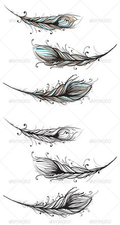 Intricate Decorative Feathers Illustration