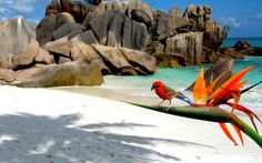 Sail&Diving Seychelles