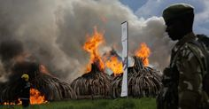 China Bans Its Ivory Trade, Moving Against Elephant Poaching - The New York Times