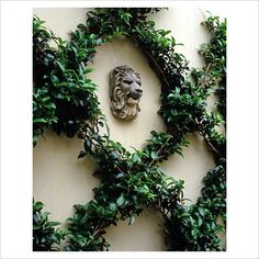 Espaliered Camelia ~ Espalier: a trellis or framework on which the trunk and branches of fruit trees or shrubs are trained to grow in one plane. Garden Pool, Garden Art, Garden Landscaping, Garden Design, Garden Ideas, Formal Gardens, Outdoor Gardens, Plant Pictures, Enchanted Garden