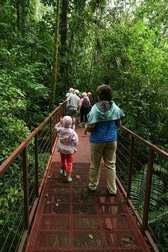 Canopy Tours in Costa Rica : Travel Tips   Costa Rica Things to Do