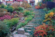 piękny ogród kamienne schody w ogrodzie