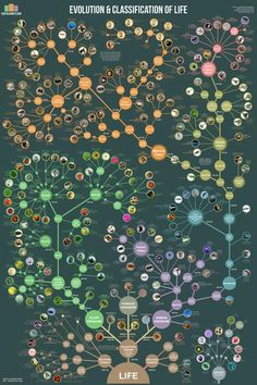 Science infographic and charts Evolution & Classification of Life Infographic Description Tree of Life poster It shows how over 250 common plants, animals Science Classroom, Teaching Science, Science Education, Life Science, Classroom Posters, Education Posters, Science Art, Science Biology, Science Activities